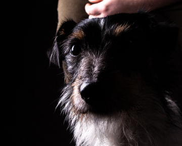 stabile Mensch-Hund Beziehung 2