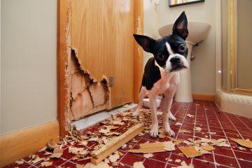 Verhaltensanalyse Hund