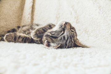Verhaltensberatung Katze