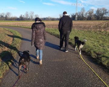 stabile Mensch-Hund Beziehung II