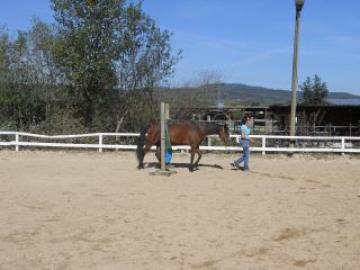 Pferdeführung