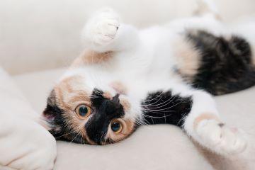 Verhaltensberatung Katze im Glück