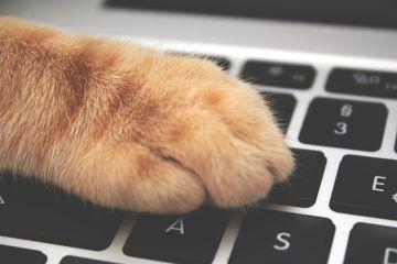 Telefonische Beratung für Katzen