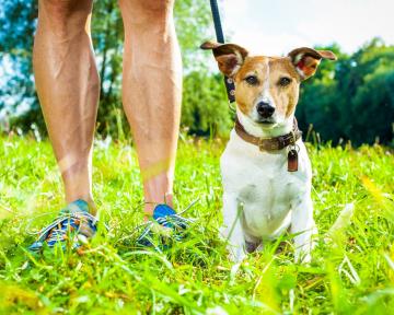 Hundebegegnung Leine 1