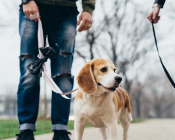 Hundebegegnung Leine 2