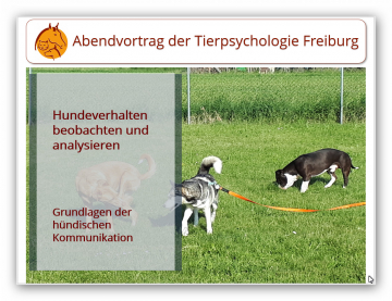 Vortrag Hundebeobachtungen I