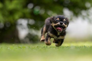 dog-1801419_1920