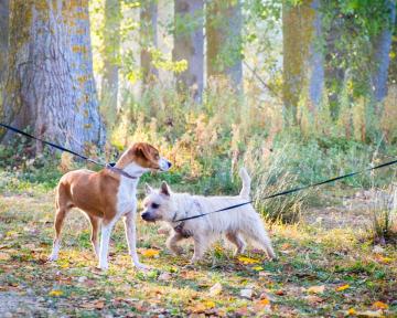 Hundebegegnung an Leine
