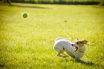 dog-1367297_1920