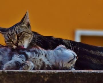 Folgeberatung Katze 1