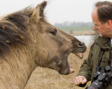 Erstgespräch Pferd 1