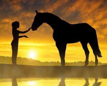 Einzelcoaching Pferd 2