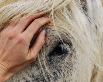 Einzelcoaching Pferd 1(1)