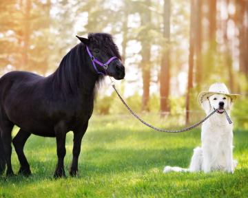 Pferd und Hund 1