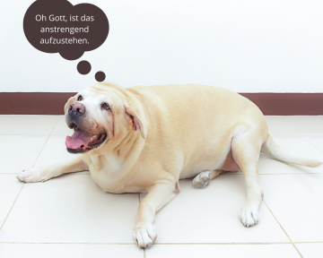 Ernährungsberatung für dicke Hunde