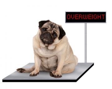 Diätberatung für Hunde