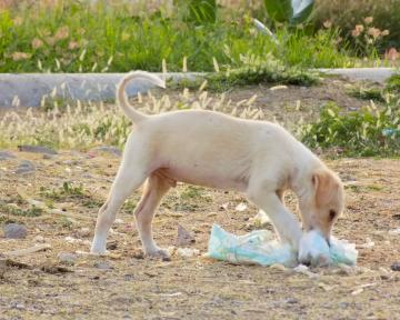 Ernährungsberatung für Staubsaugerwelpen
