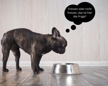 Ernährungsberatung für mäkelige Hunde