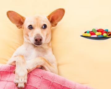 Ernährungsberatung kranke Hunde