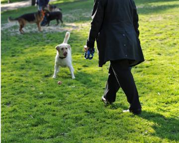 Kopie von Mensch-Hund Beobachtung