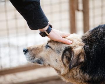 Beobachtung Mensch-Hund Teams