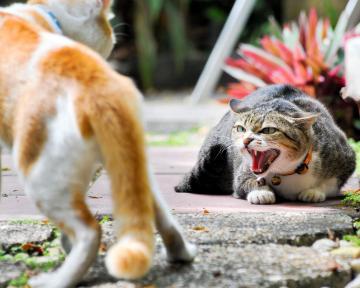 Erstgespräch Katze 2